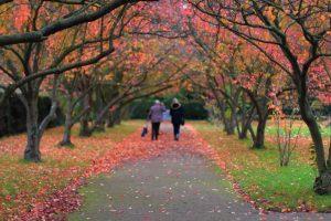 autunno a Londra